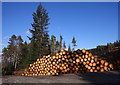 NH4937 : Timber stacks, Boblainy Forest by Craig Wallace