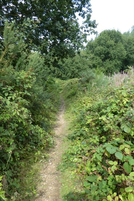 Bramble and gorse lined path
