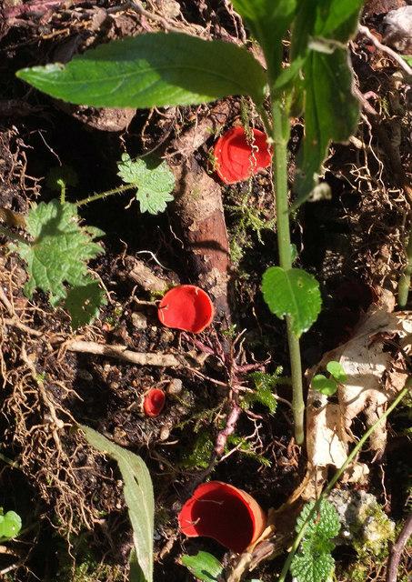 Fungi, Higher Combe Wood