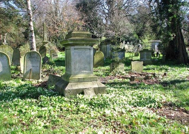 Wild primroses in the Rosary Cemetery