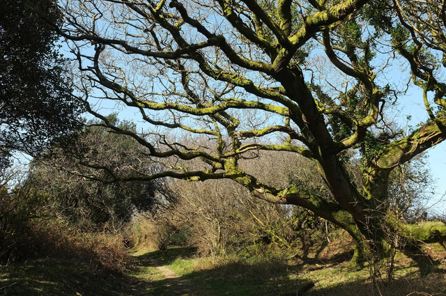 Bridleway from Moor Cross