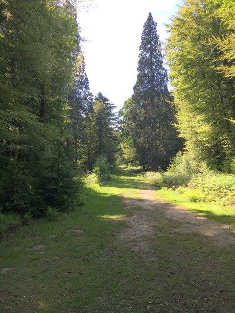 Path by Vinney Ridge Inclosure