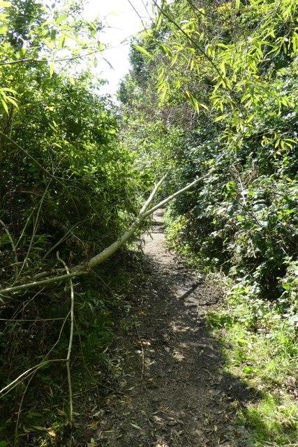Tree across the path