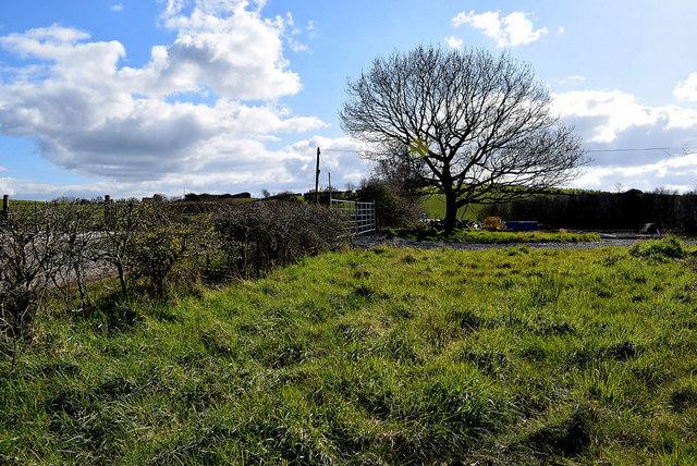 Bare tree in field, Roscavey