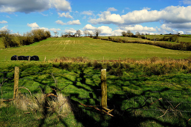 Shadows in field, Curr