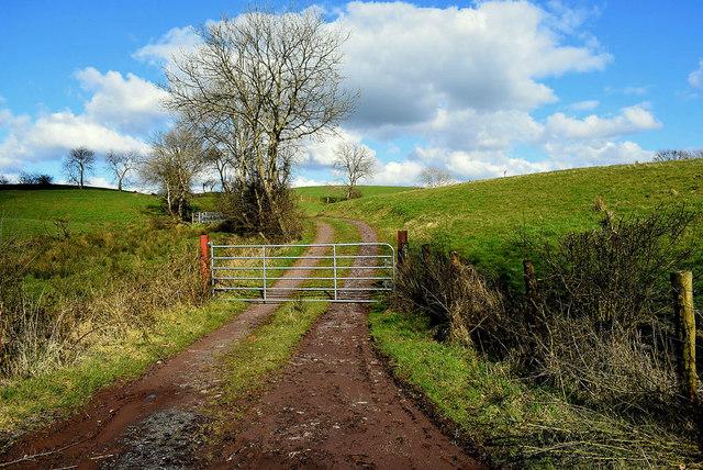Gate and lane, Roscavey