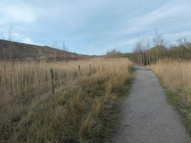 Looking east on the Riverbank trail, RSPB Fairburn Ings