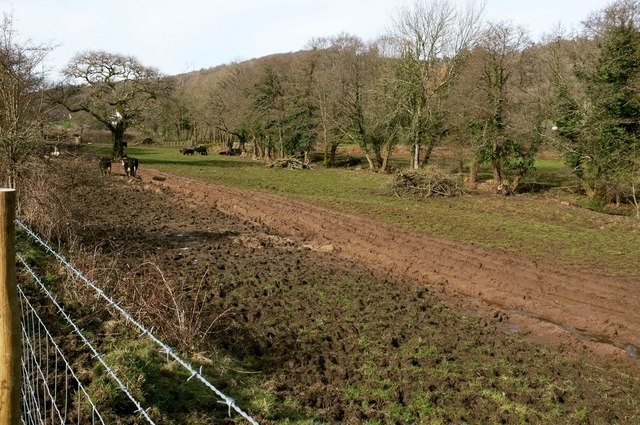 Cattle pasture by the Wray Valley Trail