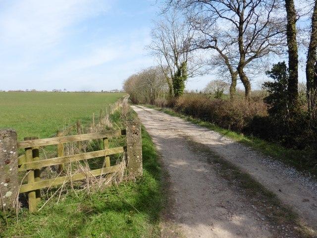Track to Blackley Down Farm