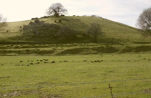 Hillside near Wray Barton