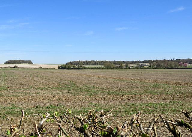 Over the hedge towards Reeded Barn Farm