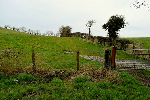 Gate, Mullagharn (Young)