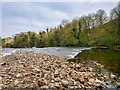 SE0088 : River Ure at Aysgarth Falls by David Dixon
