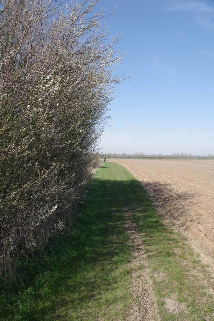 (Covid-19_15 Exercise) Blossom by Bridleway 219