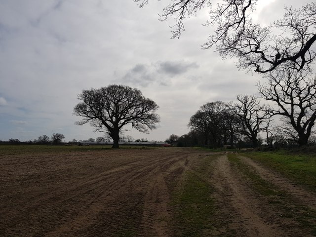Path over Kexby Stray