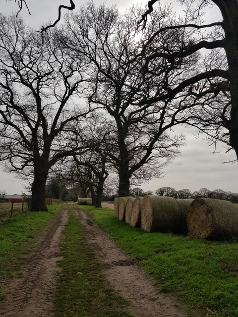 Bales on Kexby Stray