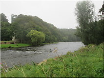 NT6929 : River  Teviot  from  Borders  Abbeys  Way by Martin Dawes