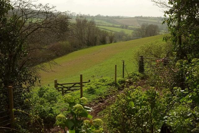 Field near Daccombe