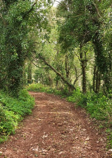 Downway Lane, Daccombe
