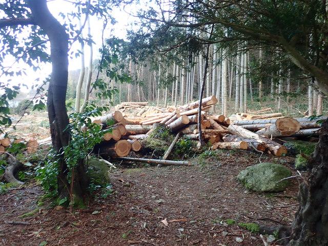 Logging operations in Donard Wood