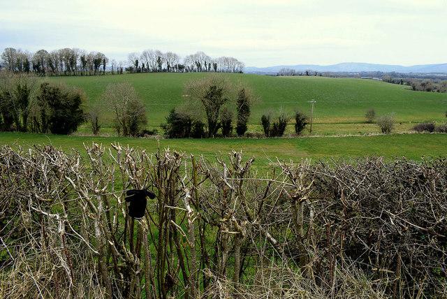 Glove in a hedge, Mullagharn