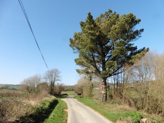 Lonesome Pine on Suddon's Lane