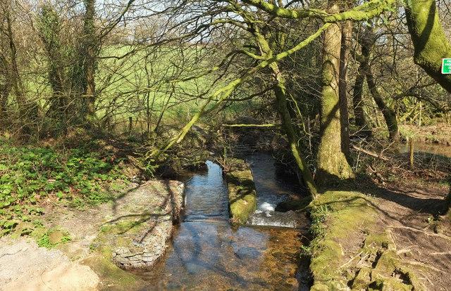 River Harbourne from Gidley Bridge