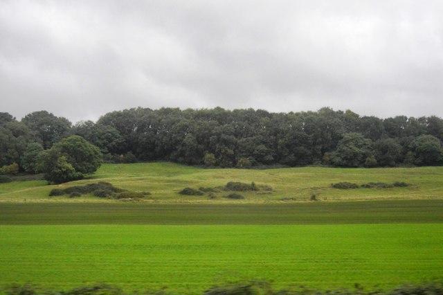 Woodland near Ansford
