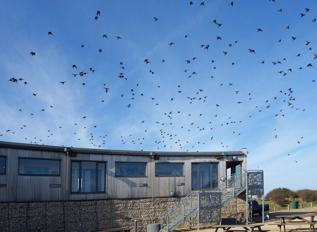 Birds over the Visitor Centre