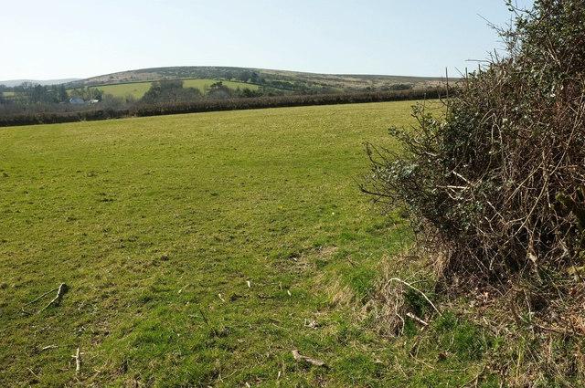 Field near Moor Cross
