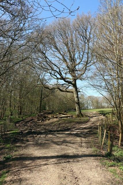 Track by Bayards Farm