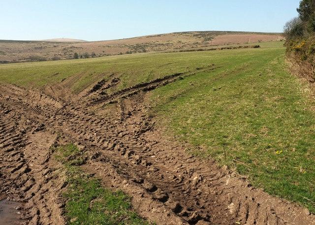 Pasture on Reddacleave Brakes