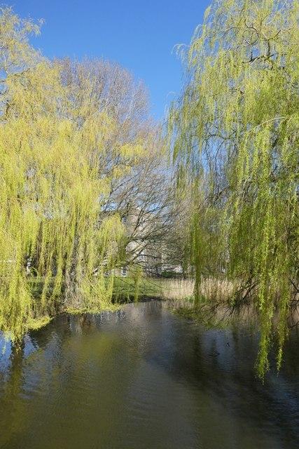 Willows from Spring Lane Bridge