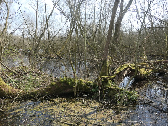 Waterlogged trees, Stanley Marsh local nature reserve