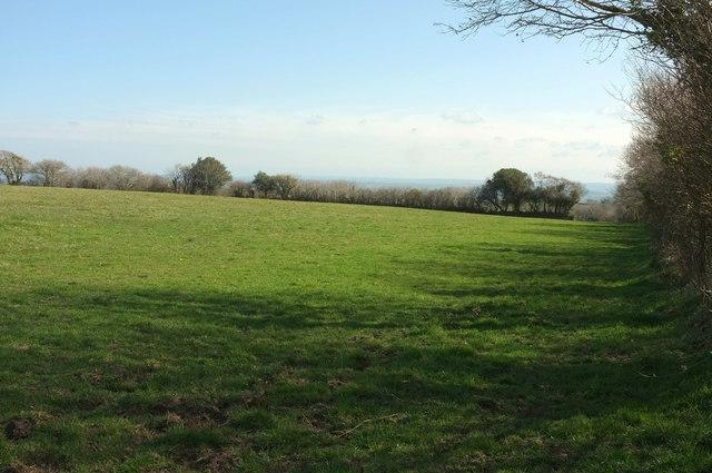 Pasture north of Moor Cross