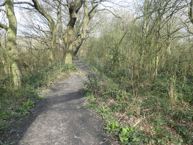 Former colliery railway, Stanley Marsh local nature reserve
