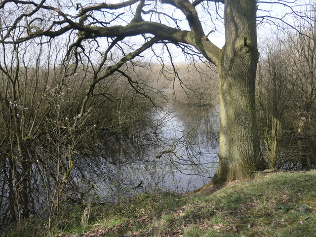 Woodland and water, Stanley Marsh local nature reserve