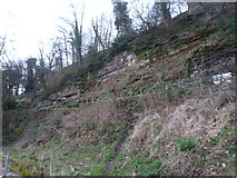 SO5074 : Cliff at Whitcliffe Common (Ludlow) by Fabian Musto