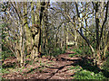SO9095 : Woodland track in Park Coppice near Blakenhall, Wolverhampton by Roger  Kidd