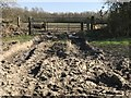 TF4107 : Dried mud in a field entrance off Rummers Lane by Richard Humphrey