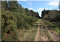 TL7589 : Track in Thetford Forest by Hugh Venables