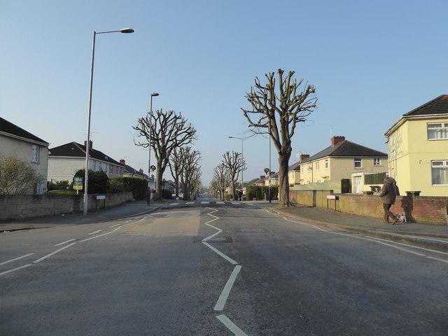 Newly pollarded trees, Pinehurst Road