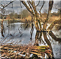 SK6070 : Flooded Meden river bank by Andy Stephenson