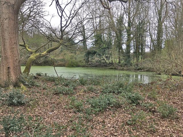 Pond on Epsom common