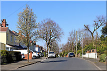 SO9096 : Goldthorn Avenue in Penn, Wolverhampton by Roger  Kidd