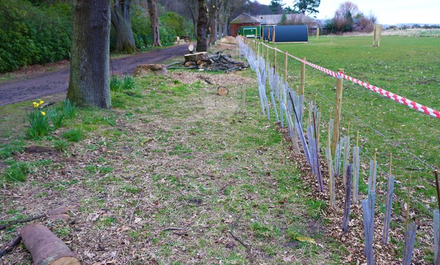 Boundary fence/hedge