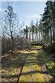 NZ0833 : Mossy woodland road in Dryderdale Plantation by Trevor Littlewood