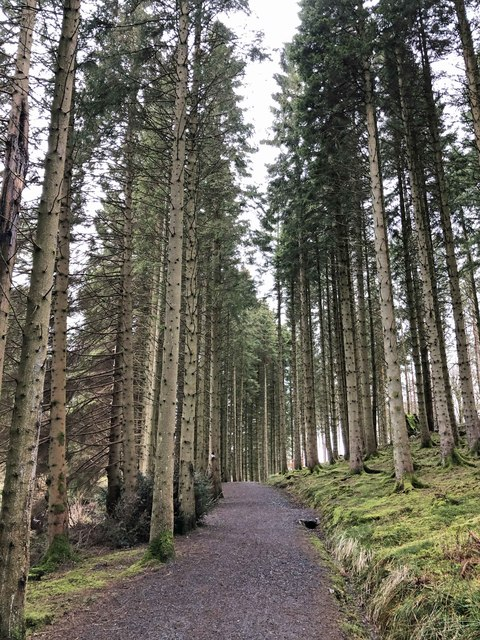 The enchanted forest walk to the red squirrel hide