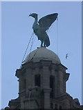 SJ3390 : Liver Bird, Royal Liver Building, Liverpool by Rudi Winter