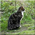 SJ9594 : Cat by the Trans Pennine Trail by Gerald England